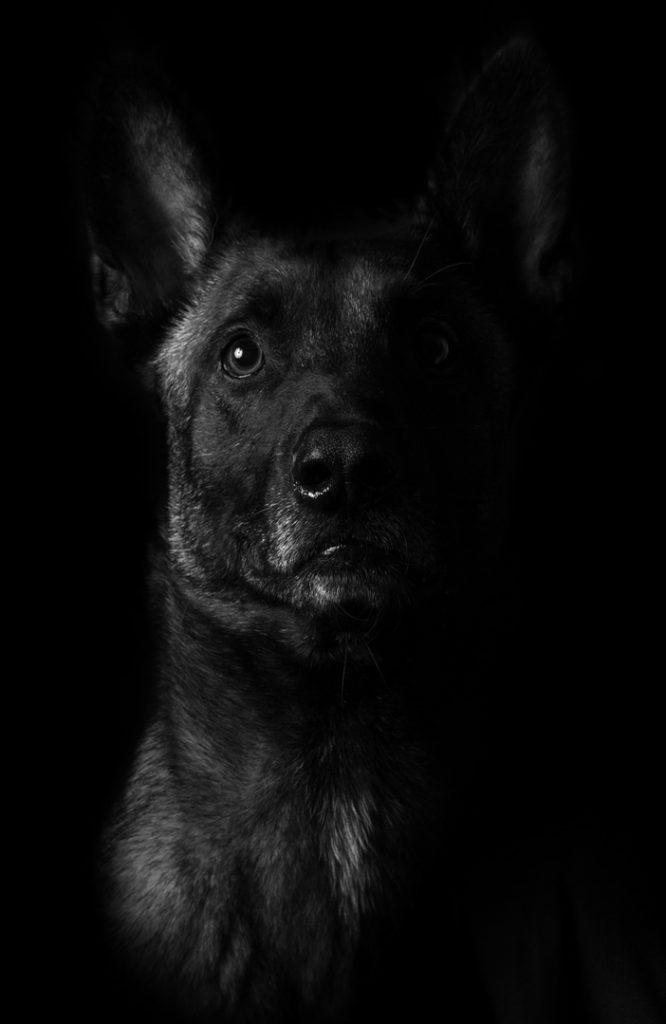 Logan perro adiestramiento