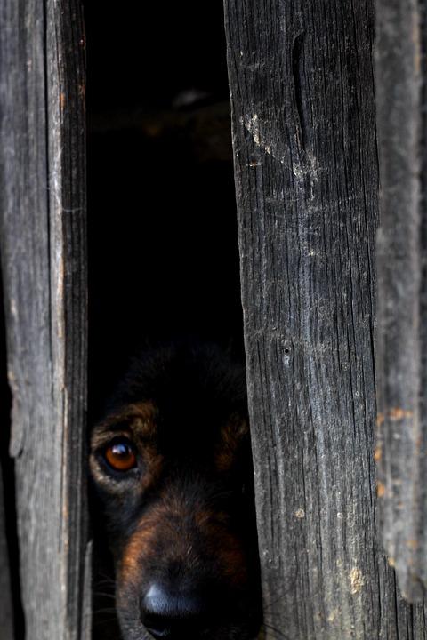 Perro asustado con miedo - Empatican